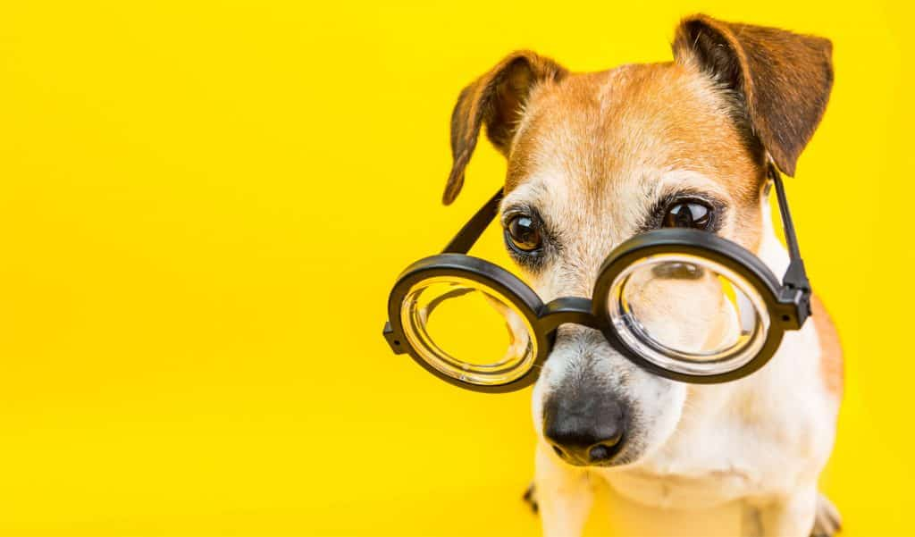 how to learn forex trading, dog with glasses on on yellow background